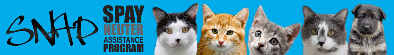 affordable neutering for cats